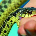 Giải mã giấc mơ thấy rắn, ngủ mộng thấy rắn có điềm gì?