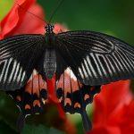 Mơ thấy con bướm đánh lô đề nào chắc chắn ăn tiền?