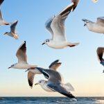 Có ý nghĩa gì khi mơ thấy chim? Giải mã ý nghĩa xổ số về chim