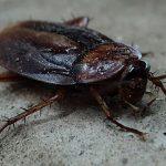 Mơ thấy côn trùng nên đánh con gì? Điềm báo khi mơ thấy côn trùng