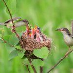 Những giấc mơ về việc thấy tổ chim là điềm báo tốt hay xấu?