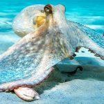 Mơ thấy bạch tuộc đánh lô đề con gì chắc chắn ăn tiền ?