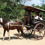 Nằm mơ thấy ngựa, xe ngựa điềm báo gì, lành hay dữ?